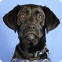 Adopt A Pet :: Lizzy - Minneapolis, MN