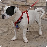 Adopt A Pet :: Matilda - Newcastle, OK