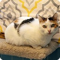 Adopt A Pet :: Annie - Huntsville, AL