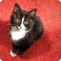 Adopt A Pet :: Miss Olive - Southington, CT