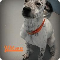 Adopt A Pet :: Wilson - Muskegon, MI