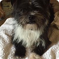 Adopt A Pet :: Marty McFly - Adoption Pending - West Allis, WI