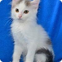 Adopt A Pet :: Chase - Buford, GA