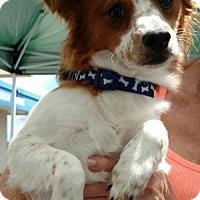 Adopt A Pet :: Cam - Marietta, GA
