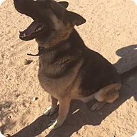 Adopt A Pet :: Chip - Victorville, CA