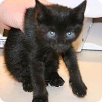 Adopt A Pet :: Gigi - Wildomar, CA