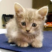 Adopt A Pet :: Allyson - Oskaloosa, IA