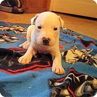 Adopt A Pet :: Karma - Wichita Falls, TX