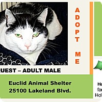 Adopt A Pet :: Quest - Euclid, OH