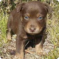 Adopt A Pet :: Pablo - Allentown, NJ