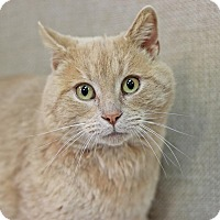 Adopt A Pet :: Buffalo - $10! - Midland, MI