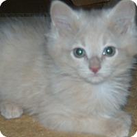 Adopt A Pet :: Skylar,Carol,Jax - Buford, GA