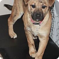 Adopt A Pet :: Barbra - Effort, PA