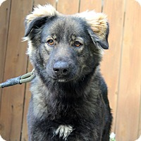 Adopt A Pet :: Wynona - 42 pounds - Los Angeles, CA
