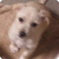 Adopt A Pet :: Alvin - Encinitas, CA