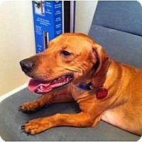 Adopt A Pet :: Nino - Arlington, TX