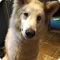 Adopt A Pet :: Einstein - Madison, WI