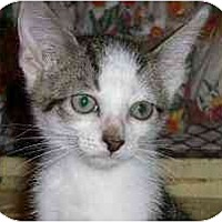 Adopt A Pet :: Mercedes - Lombard, IL