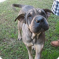 Adopt A Pet :: Delilah - Greenville, RI