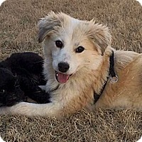 Adopt A Pet :: *Fluffernutter - PENDING - Westport, CT