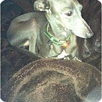 Adopt A Pet :: Jasper - SD - San Diego, CA