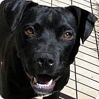 Adopt A Pet :: Rhea - Oakley, CA