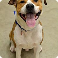 Adopt A Pet :: Tyson(foster care) - Philadelphia, PA