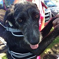 Adopt A Pet :: Xander - Ocean Ridge, FL