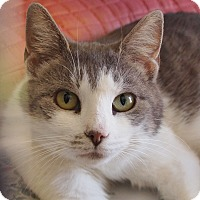 Adopt A Pet :: Willow - Ocean City, NJ