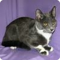 Adopt A Pet :: Kachina - Powell, OH