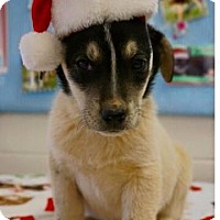 Adopt A Pet :: Alban - Carteret/Eatontown, NJ