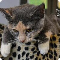 Adopt A Pet :: Hannah - Conroe, TX