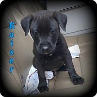 Adopt A Pet :: Kaiser - Denver, NC