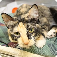 Adopt A Pet :: Whitney - Richmond, VA