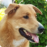 Adopt A Pet :: Mya - Grants Pass, OR