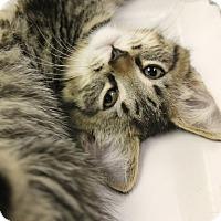 Adopt A Pet :: Reno - Medina, OH