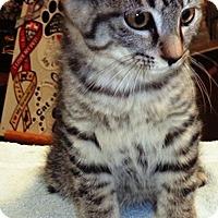Adopt A Pet :: Roxy - Lebanon, PA
