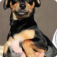 Adopt A Pet :: Twain - Tempe, AZ