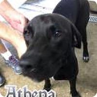 Adopt A Pet :: Roxy(Athena) - Ottumwa, IA