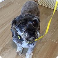 Adopt A Pet :: Huey - Redondo Beach, CA