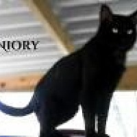 Adopt A Pet :: Niory - Columbia, TN