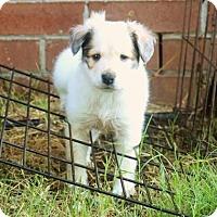 Adopt A Pet :: Frito - Enfield, CT
