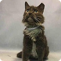 Adopt A Pet :: Peridot - Hudson, NY