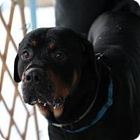 Adopt A Pet :: Titan - Tenafly, NJ