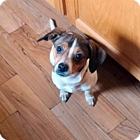 Adopt A Pet :: Mandy - Hillsboro, IL