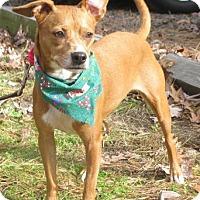Adopt A Pet :: Sugar - Voorhees, NJ