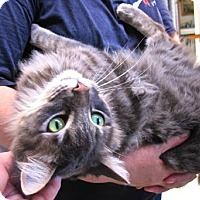 Adopt A Pet :: Oliver - Davis, CA