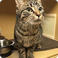 Adopt A Pet :: Cary - Barrington Hills, IL
