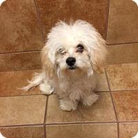 Adopt A Pet :: Junior - Philadelphia, PA