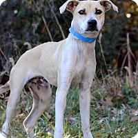Adopt A Pet :: Jax - Waldorf, MD